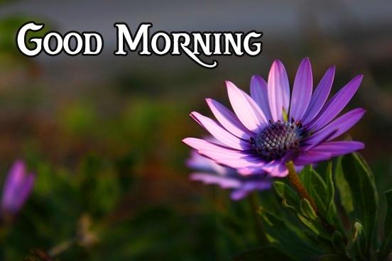 good morning photo 9 1