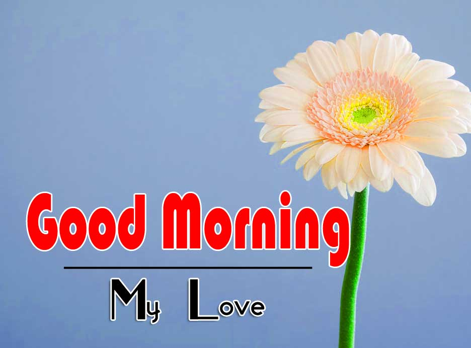 Sunflower Amazing Good Morning Images Pics Download