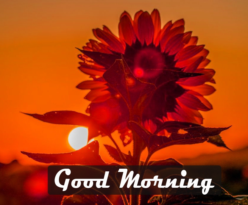Good Morning Images Photo Download 10