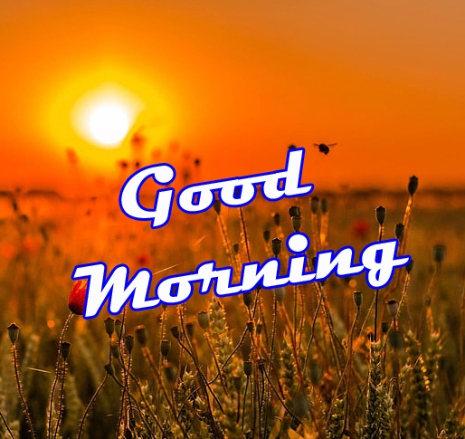 Good Morning Images Photo Download 13