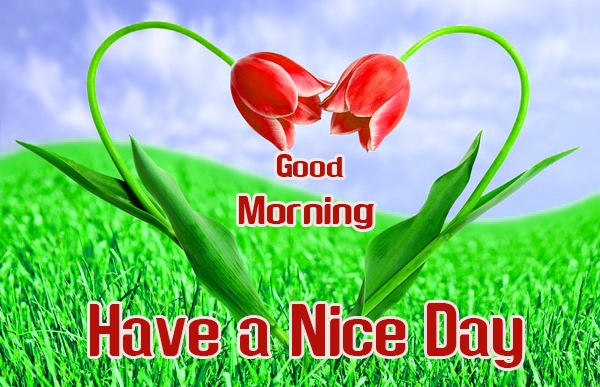 Good Morning Images Photo Download 18