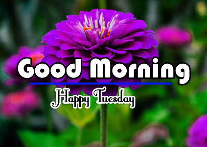 Good Morning Tuesday Images 4