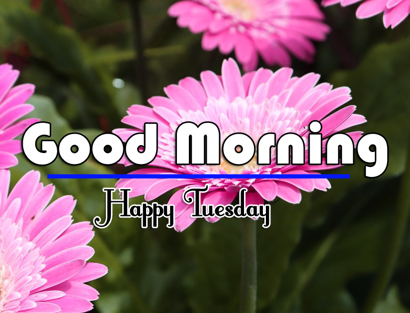 Good Morning Tuesday Images 5