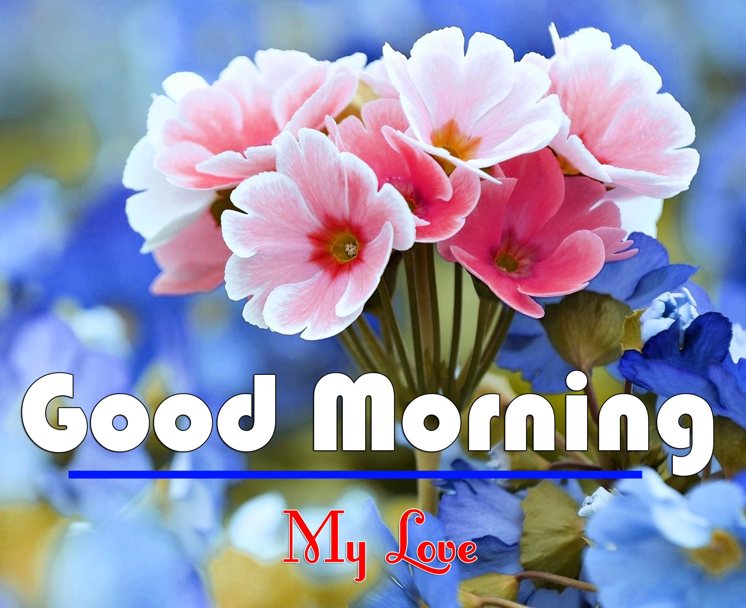 Flower Free Good Morning Wishes Images Pics Download