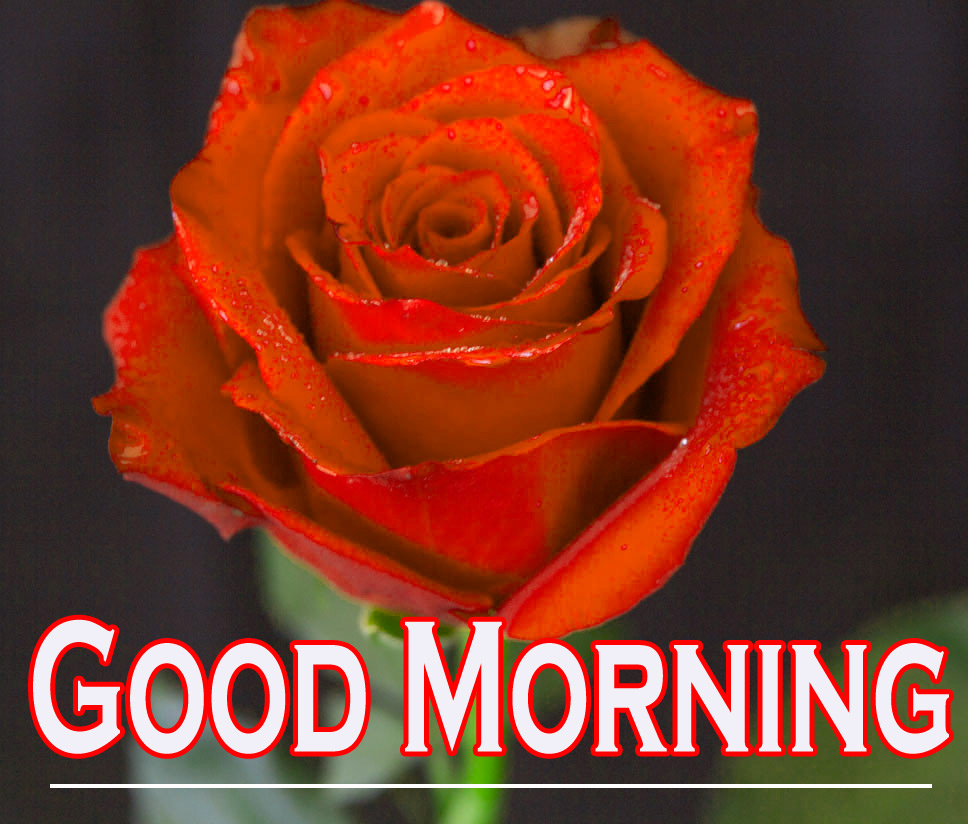 Morning Wishes Images With Red Rose 10