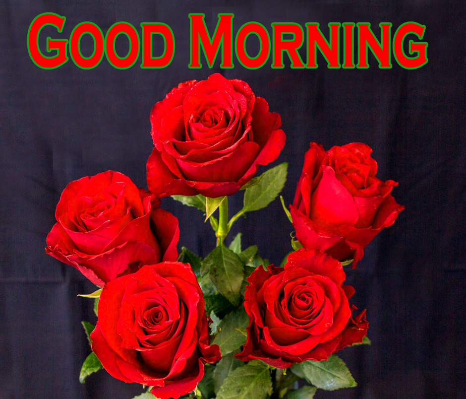 Morning Wishes Images With Red Rose 11