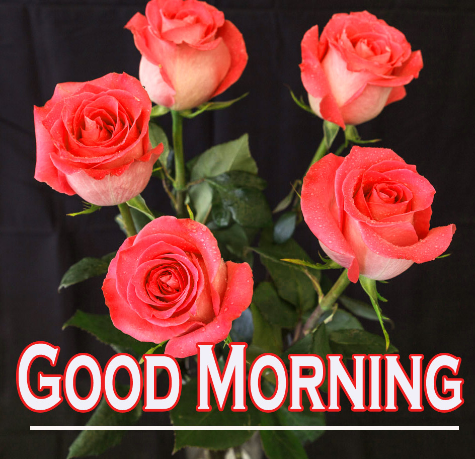 Morning Wishes Images With Red Rose 12