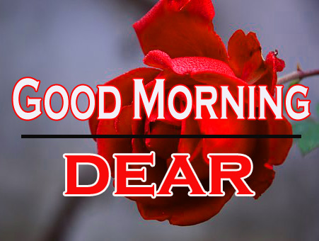 Morning Wishes Images With Red Rose 15