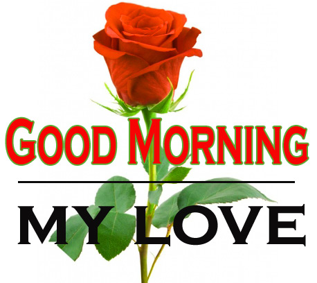 Morning Wishes Images With Red Rose 16