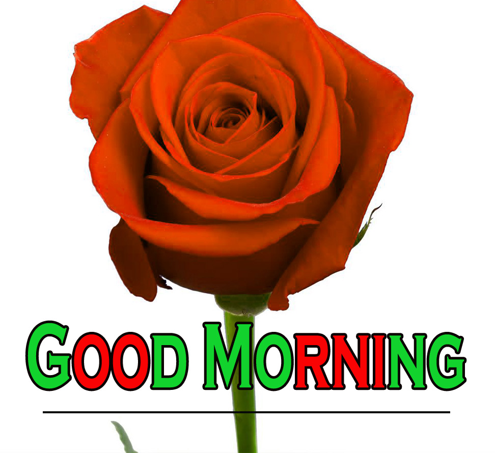 Morning Wishes Images With Red Rose 8