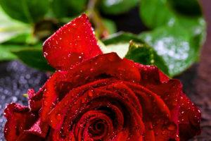 Red Rose good Morning for L