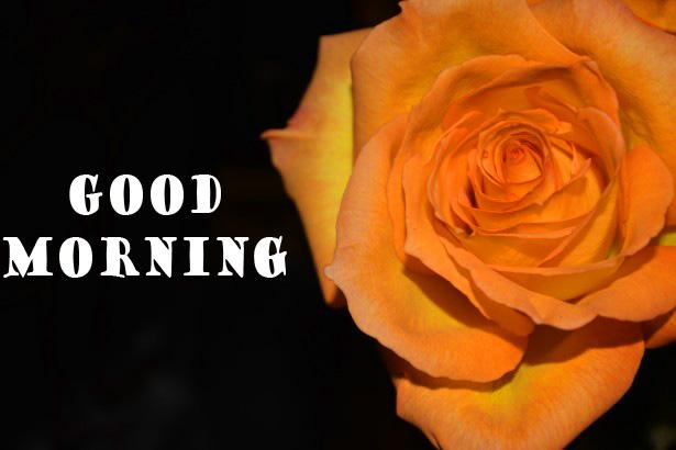 Rose good Morning Free Down