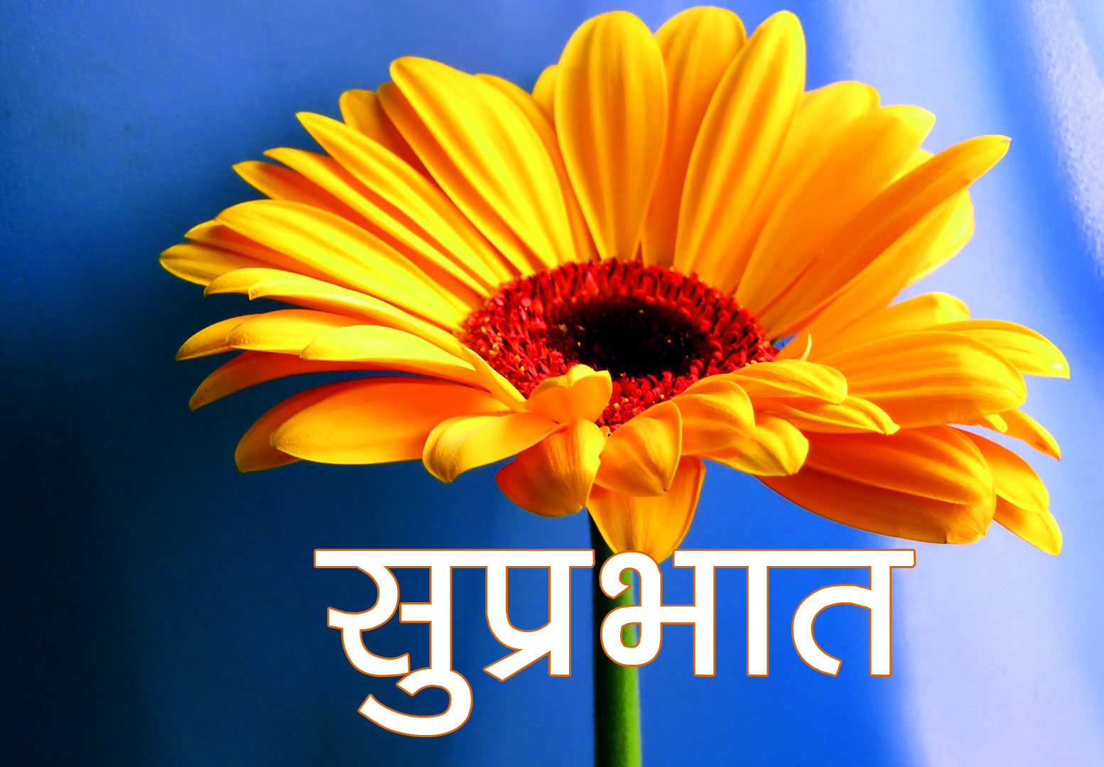 Suprabhat Pics With Flower