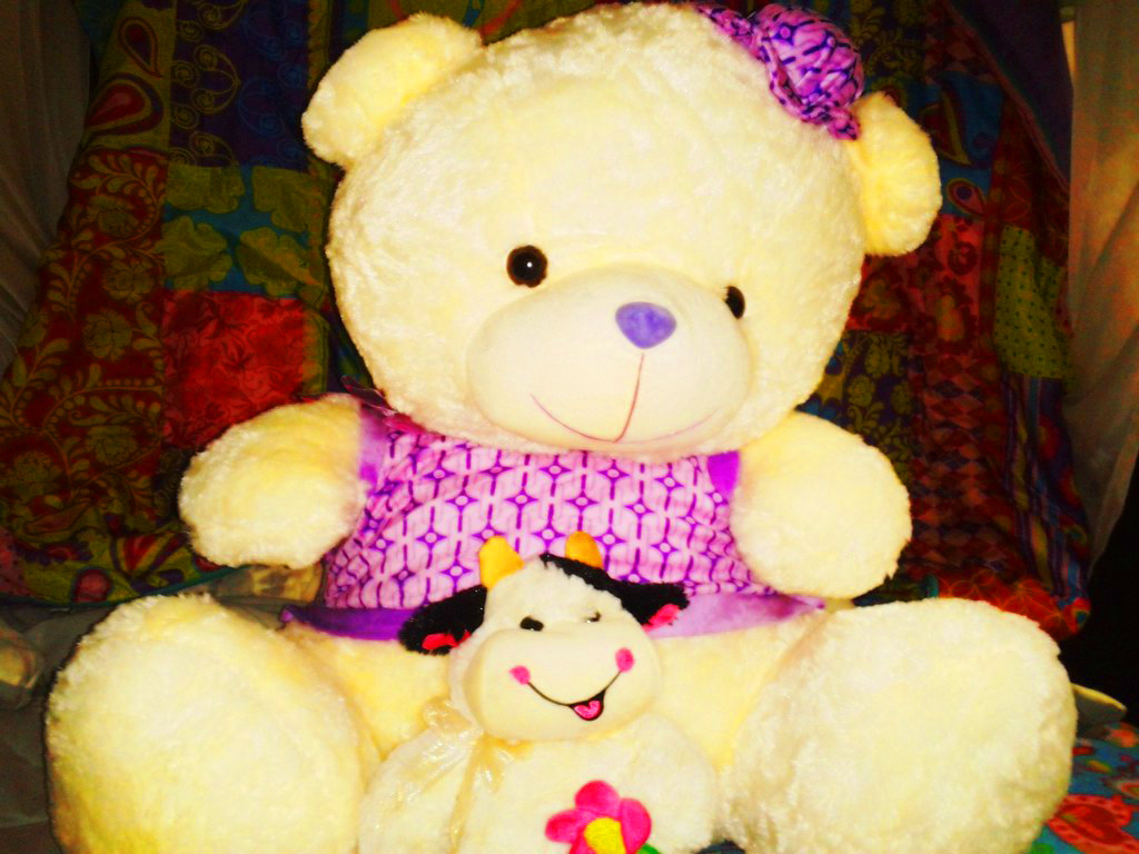 Teddy Bear Images photo pics Download