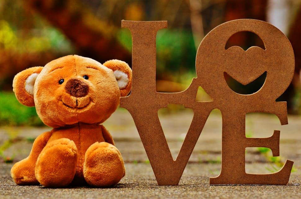 Teaddy bear Photo 16