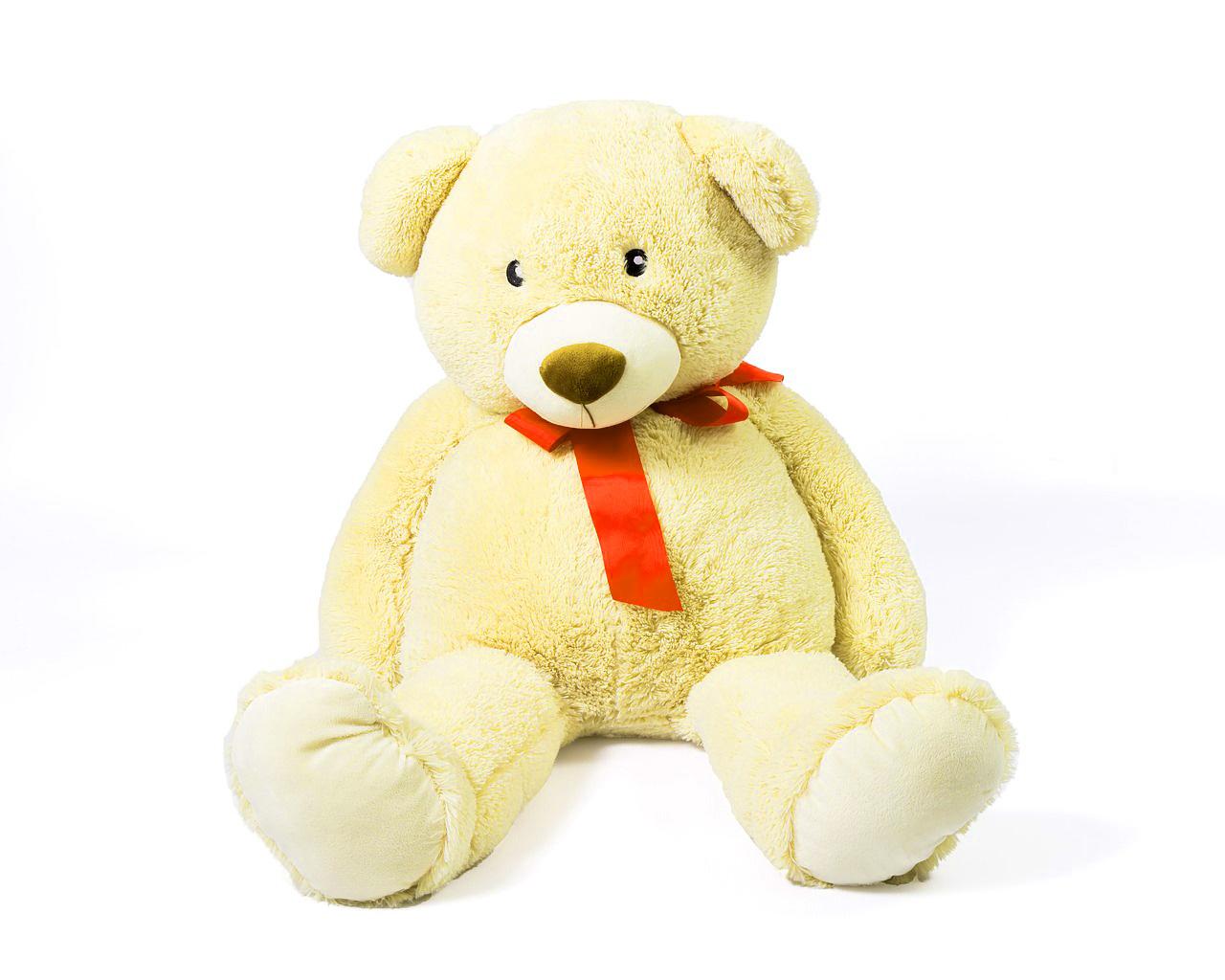 Teaddy bear Photo 19