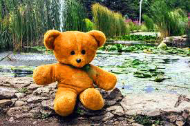 Teaddy bear Photo 34