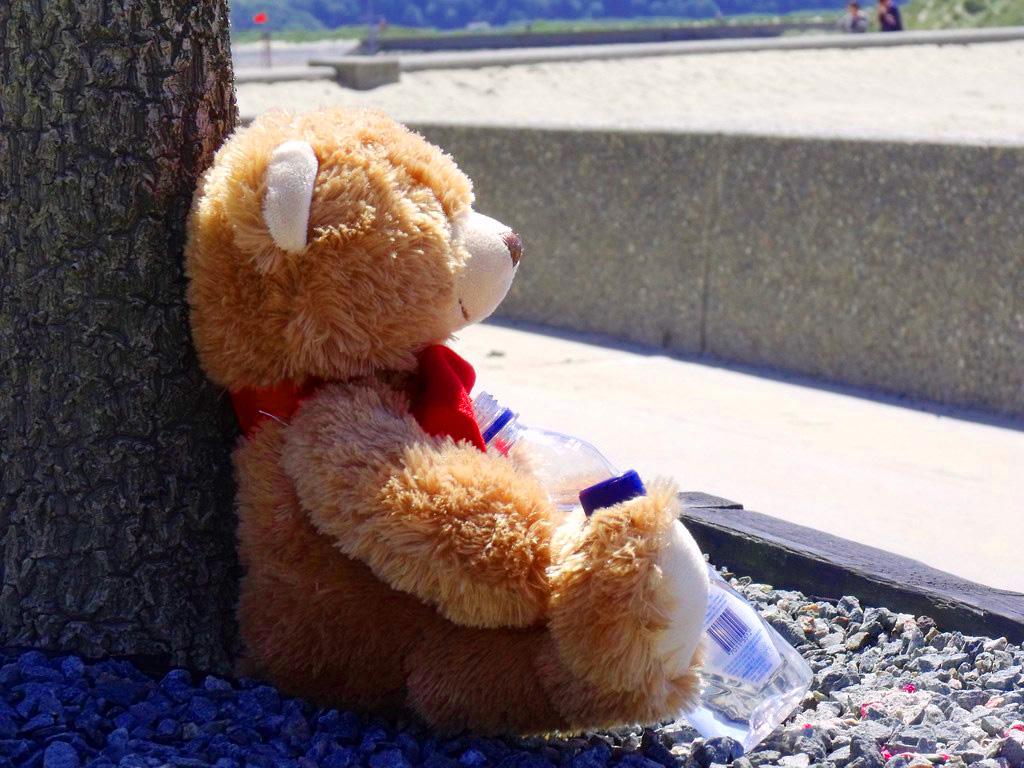 Teaddy bear Photo 9