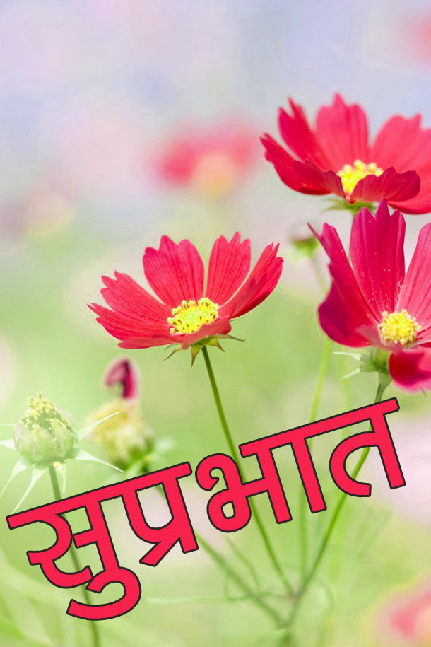 Flower good morning Wallpaper Free Download