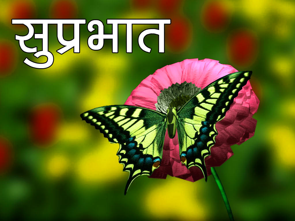 Flower good morning Photo Free Download