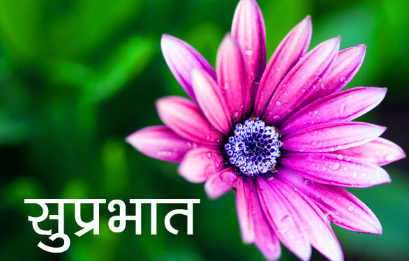 Flower good morning Pics Free Download
