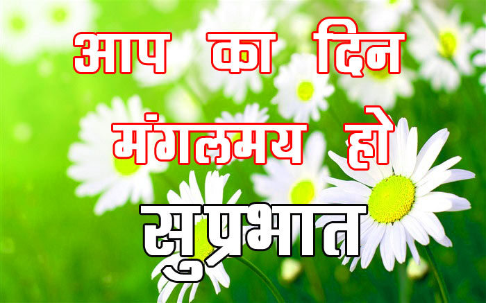 Flower good morning Wallpaper HD Download In Hindi