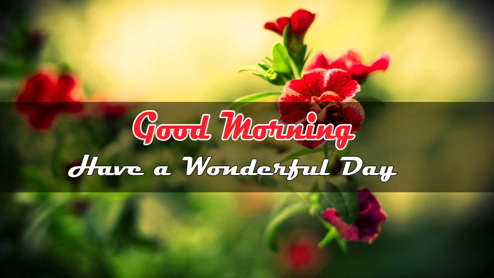 Flower good morning Wallpaper Download for Friend