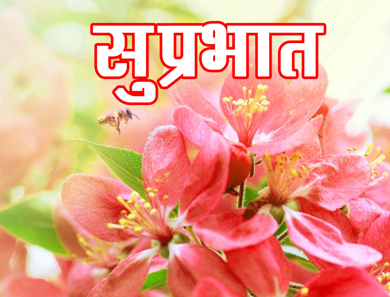 Hindi Suprabhat Flower good morning Images
