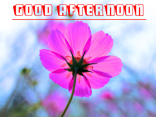 good afternoon Images HD Download