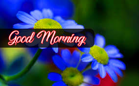 Flower Good Morning Images Pics