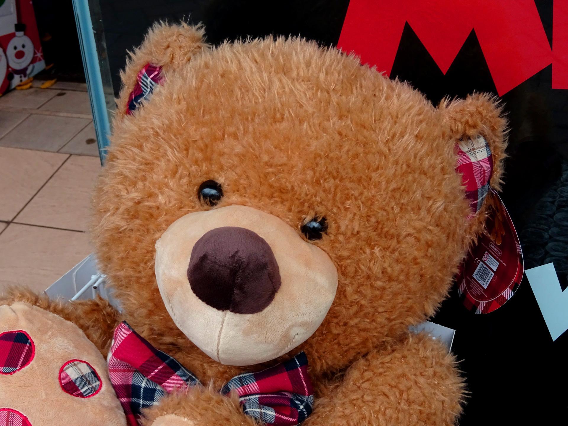 teddy bear Images 27