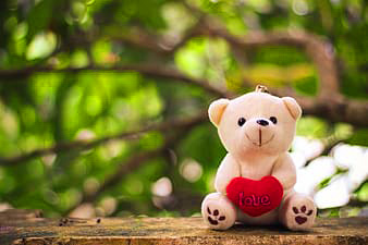 Latest Free teddy bear Images Pics Download