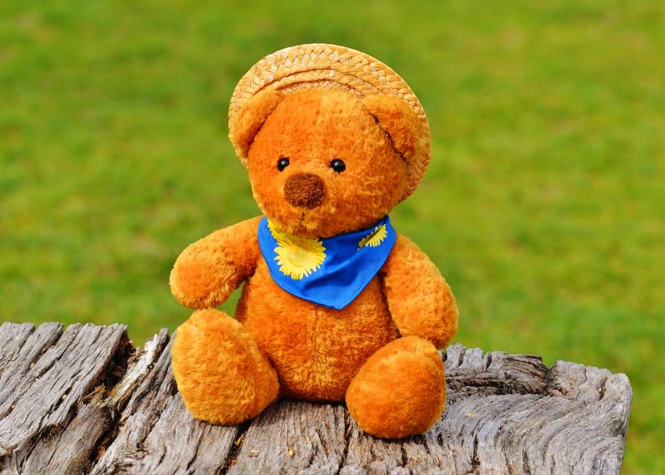 teddy bear Images 7