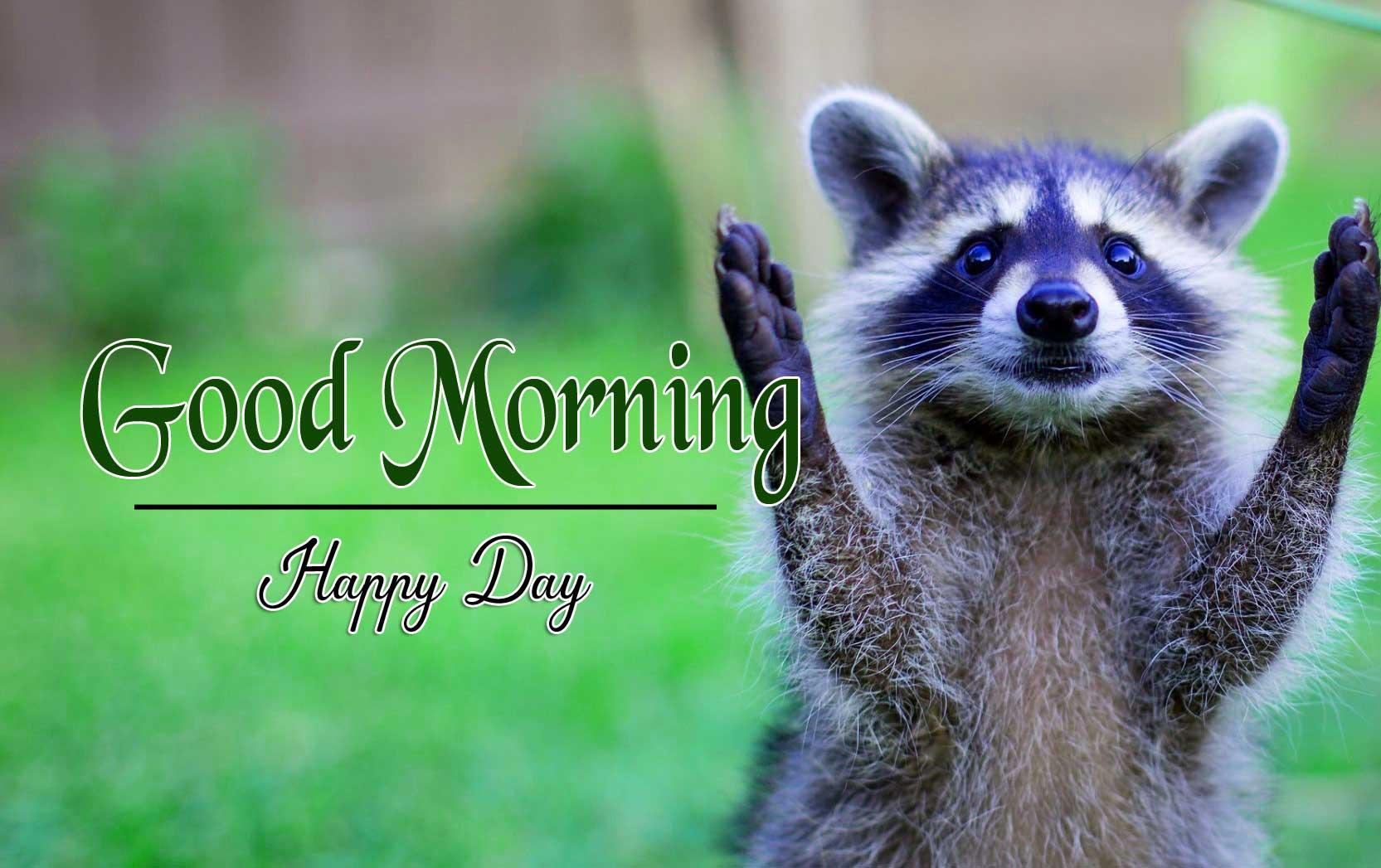 Animal Good Morning Image 2