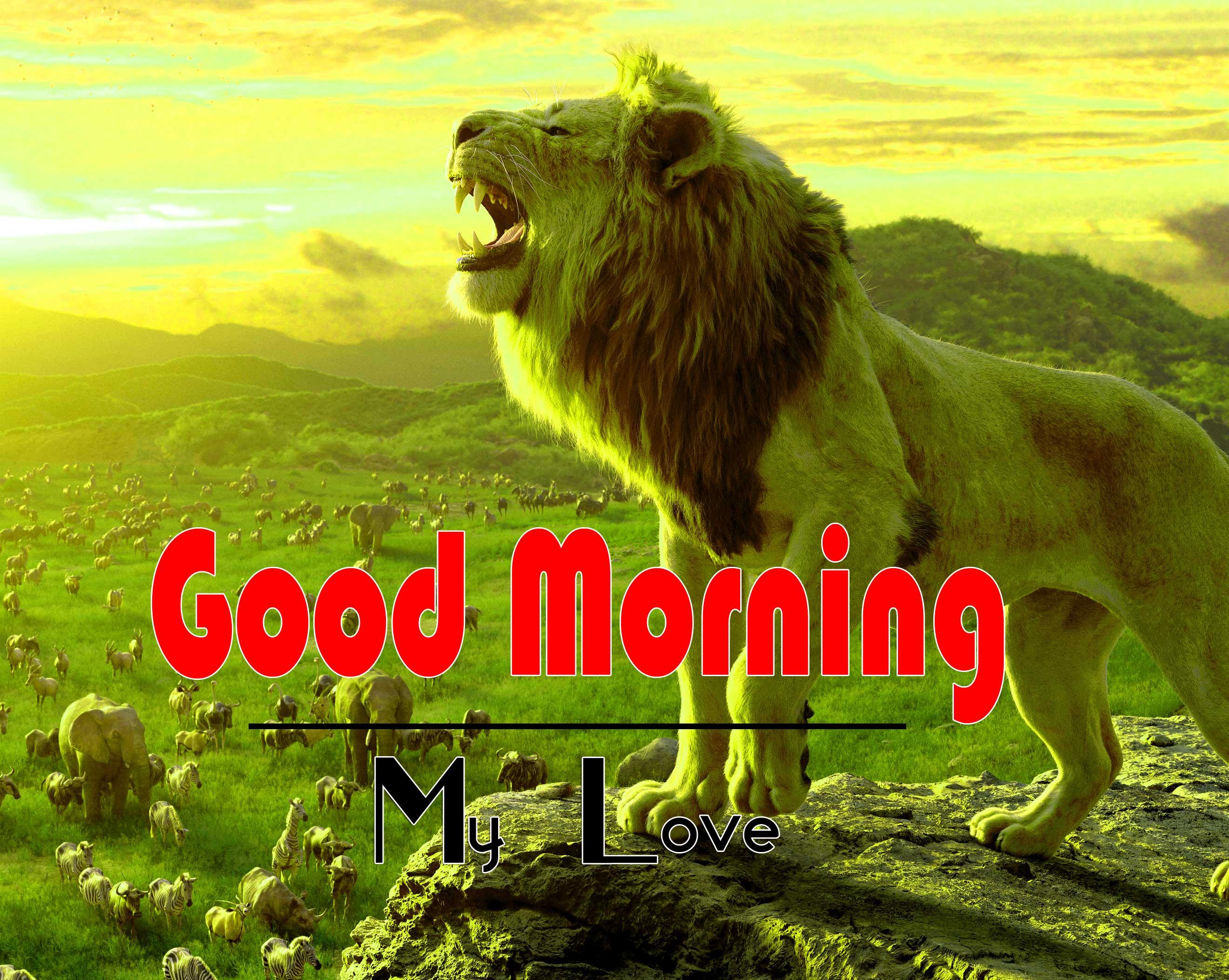 Animal Good Morning Image 3