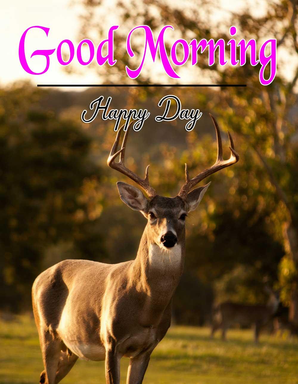 Animal Good Morning Image 4