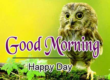 Animal Good Morning Image 5