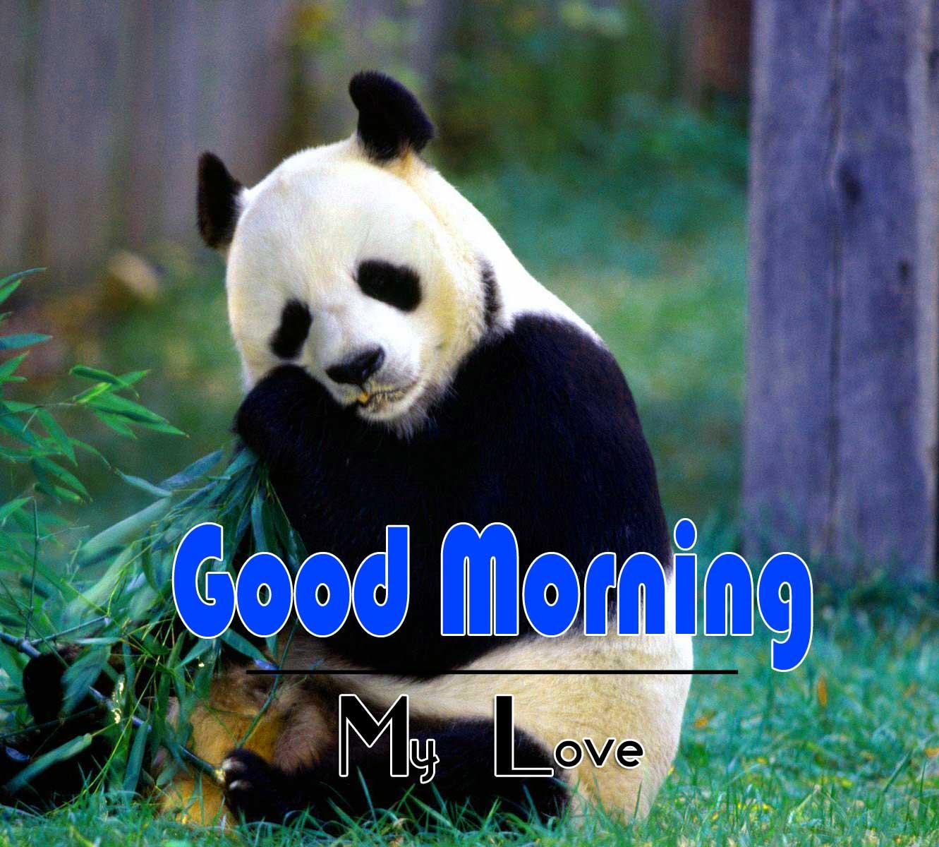 Animal Good Morning Image 6