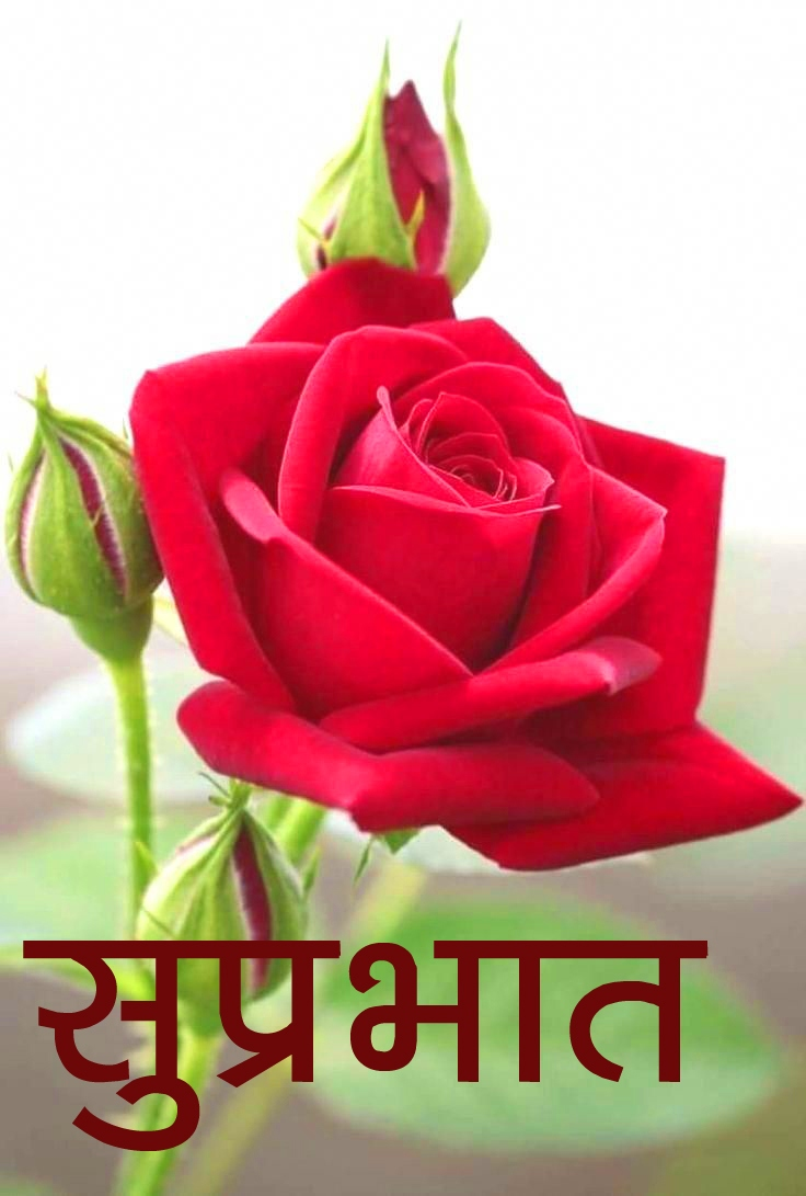 Flower good morning Images With Rose