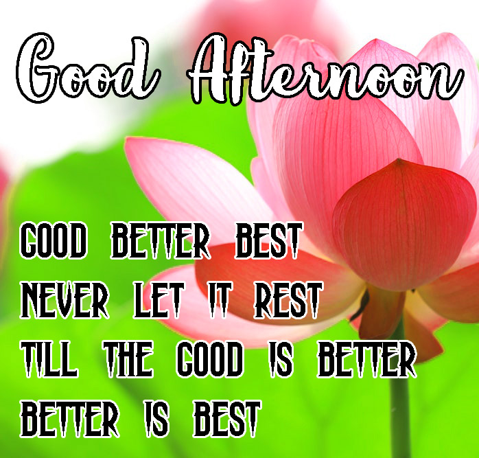 Top Beautiful Good Afternoon Images Pics Download Free