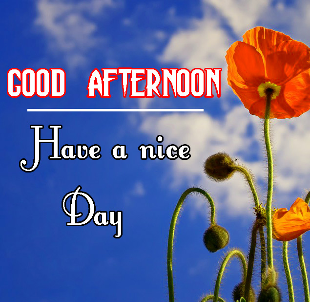 Beautiful Good Afternoon Images Photo Free Download