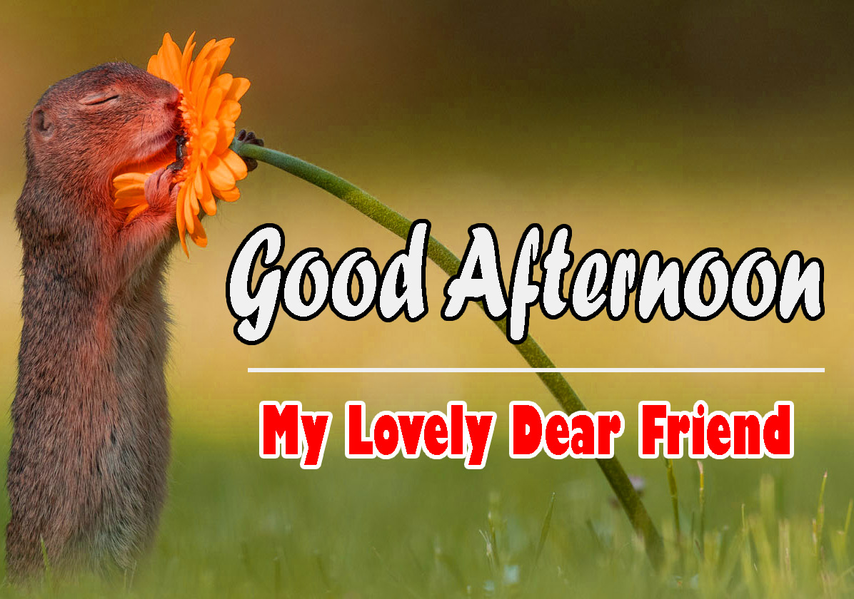 Funny Beautiful Good Afternoon Images Pics Download