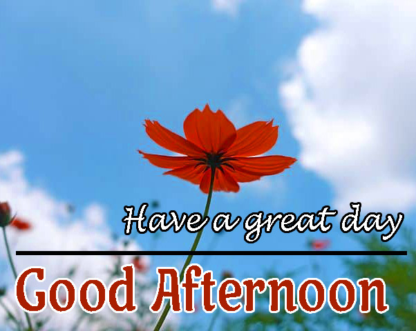 Beautiful Good Afternoon Images Wallpaper With Flower