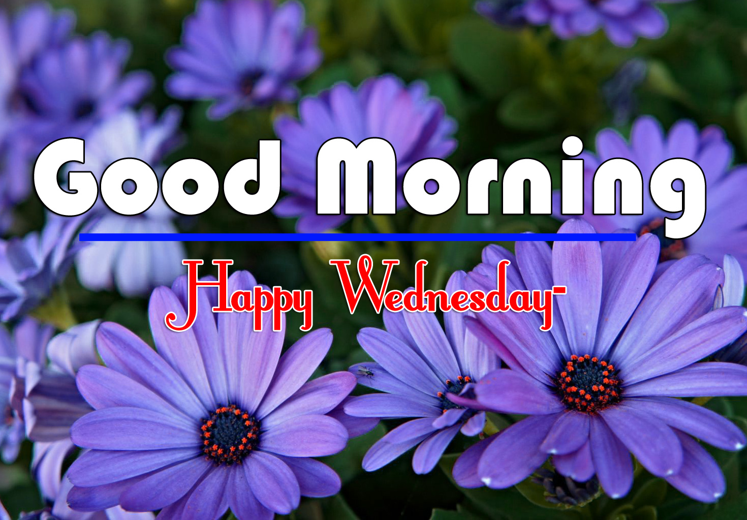 Good Morning Wednesday Images 5
