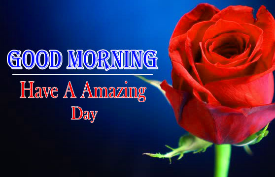 1080p Good morning HD Images Pics With Red Rose Free