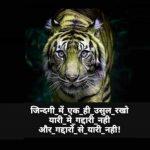 Lion Attitude Images Pics Download