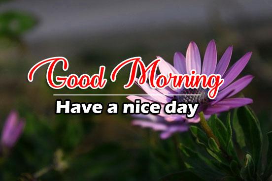 Beautiful Good Morning Images Free