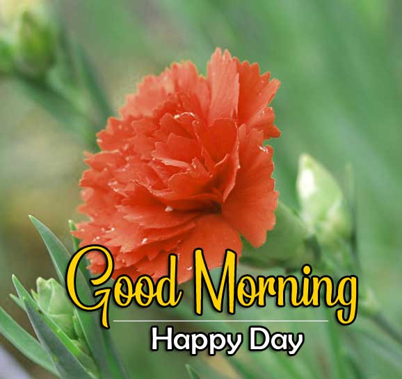 Flower Free Good Morning Pics Download