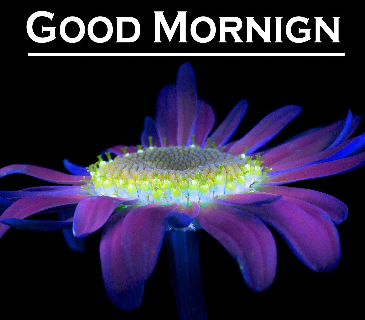Flower Good Morning Images 1