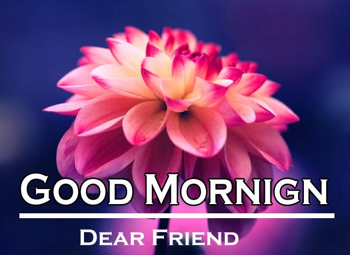 Flower Good Morning Images 7